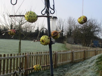A bird feeder with apples hanging off with frosty grass behind