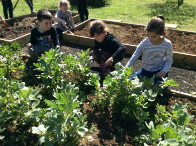 4 children kneeling by the raised beds, tending the vegetables